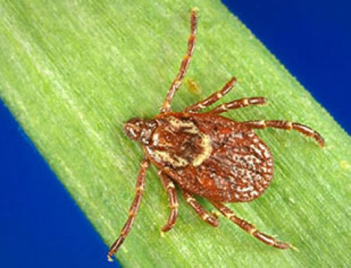 Tick Sample Collaborators Wanted: MALDI-TOF Tick ID Project